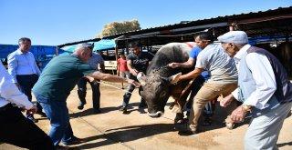 Başkan Taban Hayvan Pazarını Ziyaret Etti