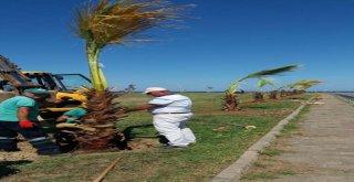 Sahile Palmiyeler Yakıştı
