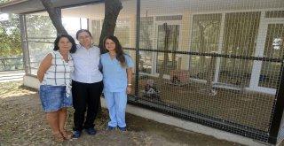 Can Dostları Osmangazi'de Sahiplerini Bekliyor