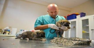 Dereye düşen yavru köpekleri belediye ekipleri kurtardı