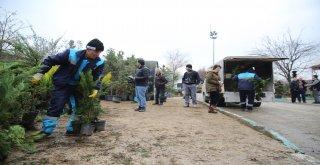 Fidanlar yeniden yeşil Bursa için toprakla buluştu