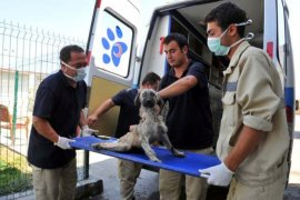 Sokak hayvanlarına Büyükşehir Belediyesi şefkati.