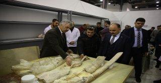 Kayseri'de 7,5 Milyon Yıllık Fosiller Bilimin Merkezinde