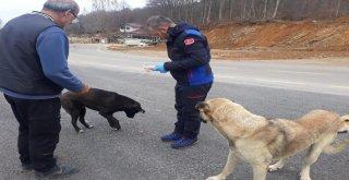 Sokak Hayvanlarına Kış Bakımı
