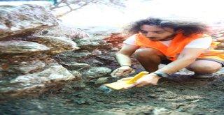 Gölyazı'da istiridye kabukları tarihe ışık tutuyor