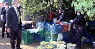 Armut bahçelerinde hasat bereketi