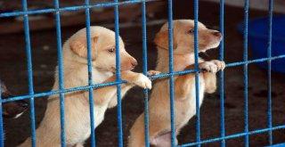 Bağcılar'da 4 Bin 644 Sokak Hayvanına Kuduz Aşısı Yapıldı