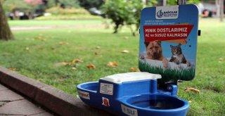 Bağcılar'daki parklarda sokak hayvanlarına su ve mama hizmeti