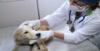 Kocaeli'de 3 bin 341 yaralı sokak hayvanı tedavi edildi