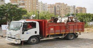 Antalya'da fayton faaliyetleri sona erdi