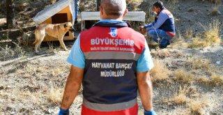 BÜYÜKŞEHİR'DEN PATİPARK'A LOJİSTİK DESTEK