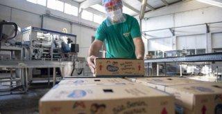 Süt Senin Gurur Mersin'in Projesi Büyüyerek Devam Ediyor