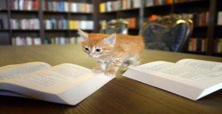 Kedili Tekke Millet Kıraathanesi'ne Yoğun İlgi