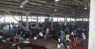İnegöl'de Hijyenik Kurban Kesim Alanları Halkın Hizmetinde