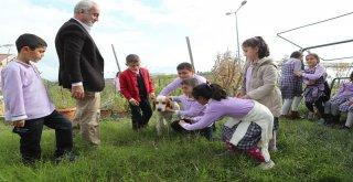 Minikler Daha Yeşil Bir Arnavutköy İçin Fidan Dikti