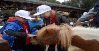 Osmangazi'den Sokak Hayvanlarını Koruma Günü Etkinliği