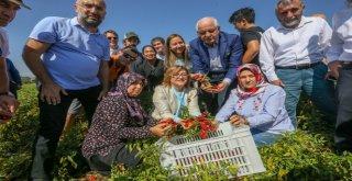 GASTROANTEP'LE 3 GÜNDE 250 BİN KİŞİ LEZZETE DOYDU
