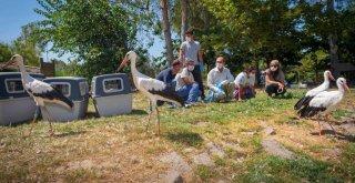 Doğal Yaşam Parkı'nda tedavi edilen leylekler doğaya bırakıldı