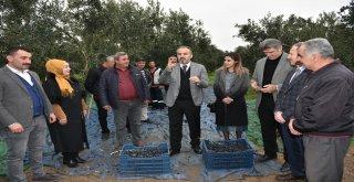 Başkan Aktaş'la hasat zamanı