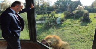 Hayvanat bahçesi 20 yaşında