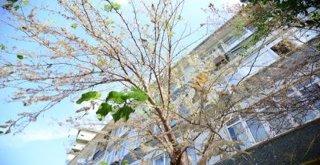 Kadıköy Belediyesi'nden Amerikan Beyaz Kelebeği Tırtılı ile Mücadele