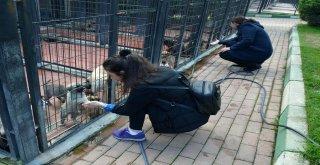 Osmangazi'de 493 Sokak Hayvanı Sıcak Yuvaya Kavuştu