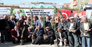 Büyükşehir 15 Bin Badem Fidanını Üreticisiyle Buluşturdu