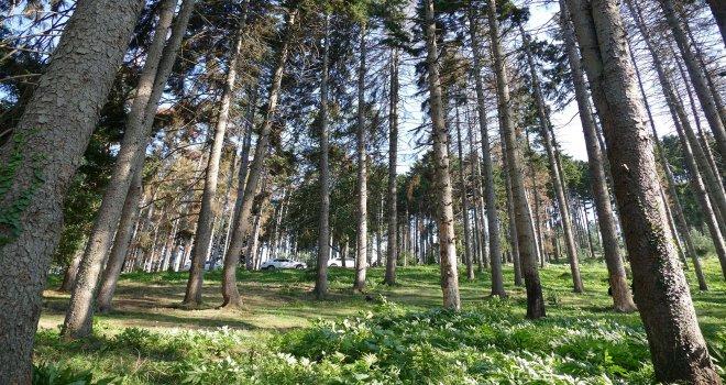 Atatürk Köşkü Ormanı için oluşturulan komisyon göreve başladı