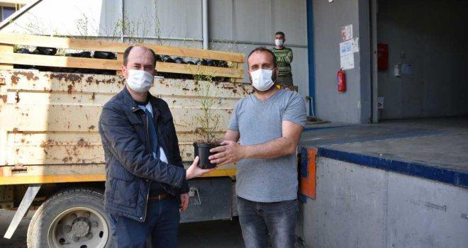Yaban mersinleri Bursa'da filizleniyor