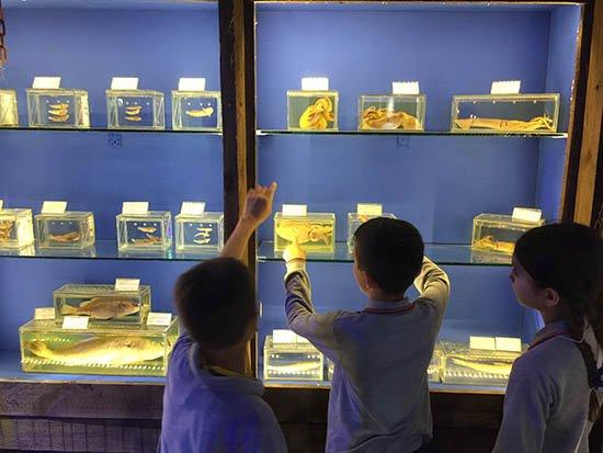 Antalya'nın deniz yaşamı bu müzede