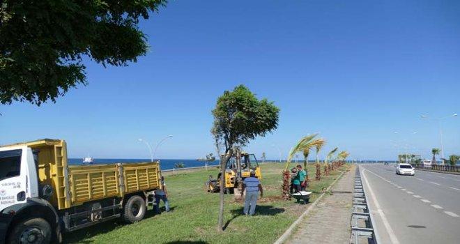 Büyükşehir Belediyesi 3 milyon 940 ağaç, çalı türü bitki ve çiçek dikti