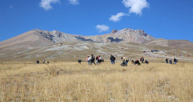 Erciyes'ten Toplanan Tohumlar Erciyes'e Ekiliyor
