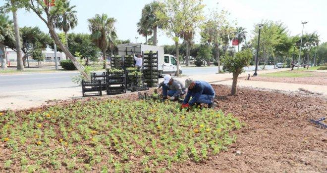 Mersin'de Cadde ve Parklar Çiçek Açtı