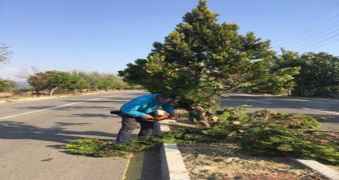 Saruhanlı 'da Ağaçlar Kışa Hazırlanıyor