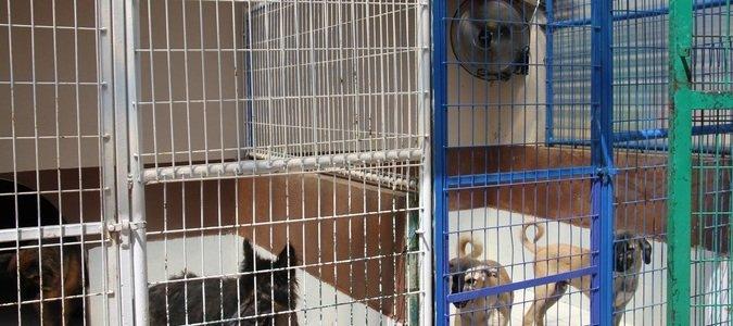 Beyoğlu'nda sokak hayvanları vantilatör ile serinliyor