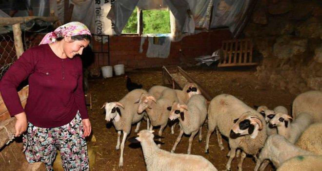 """İzmir kırsalında """"başka bir tarım"""" modeli gelişiyor"""